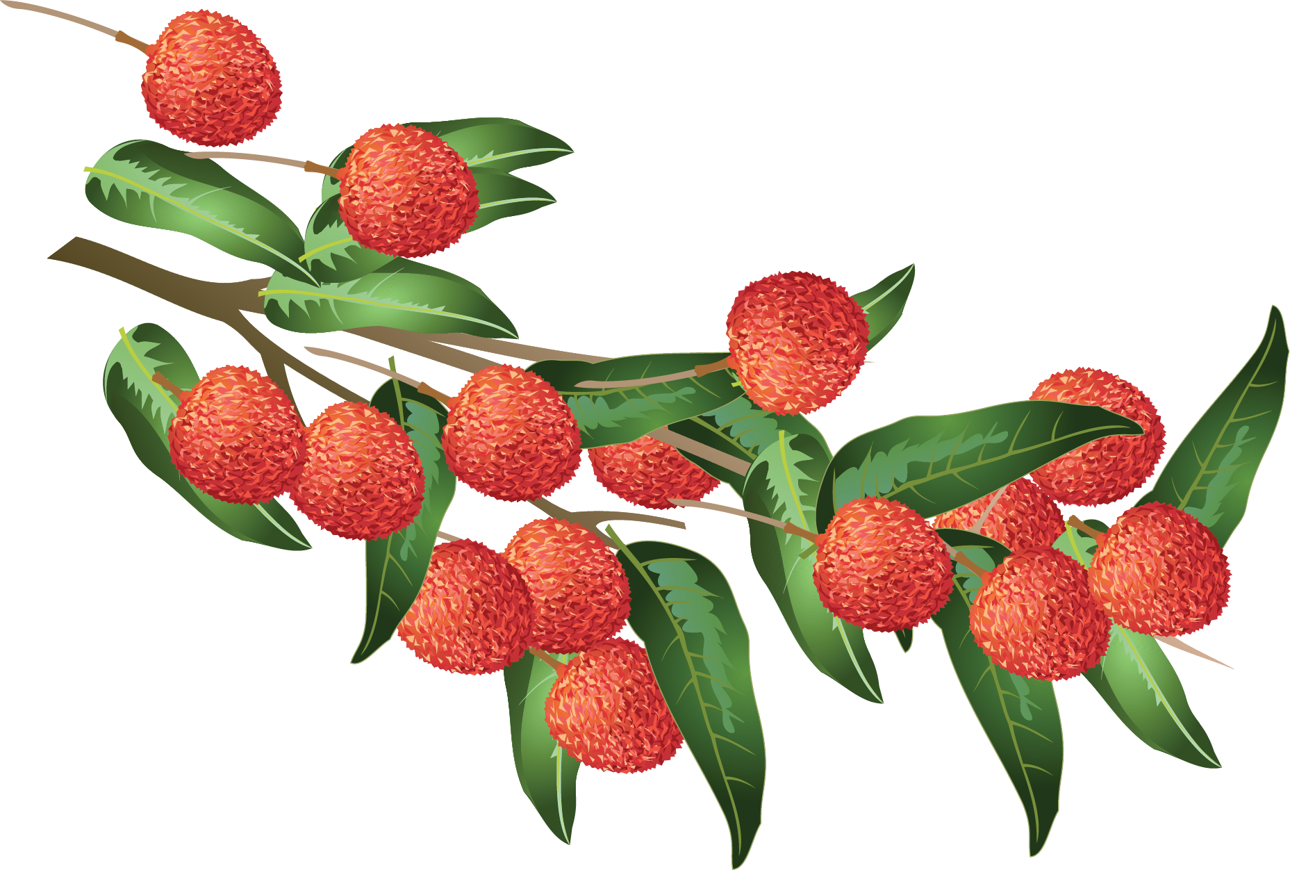 Lush Lychees